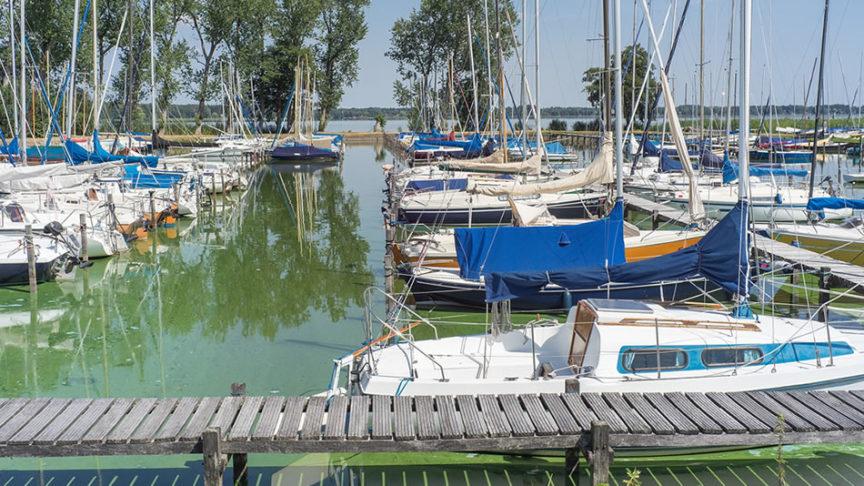 algae and boats