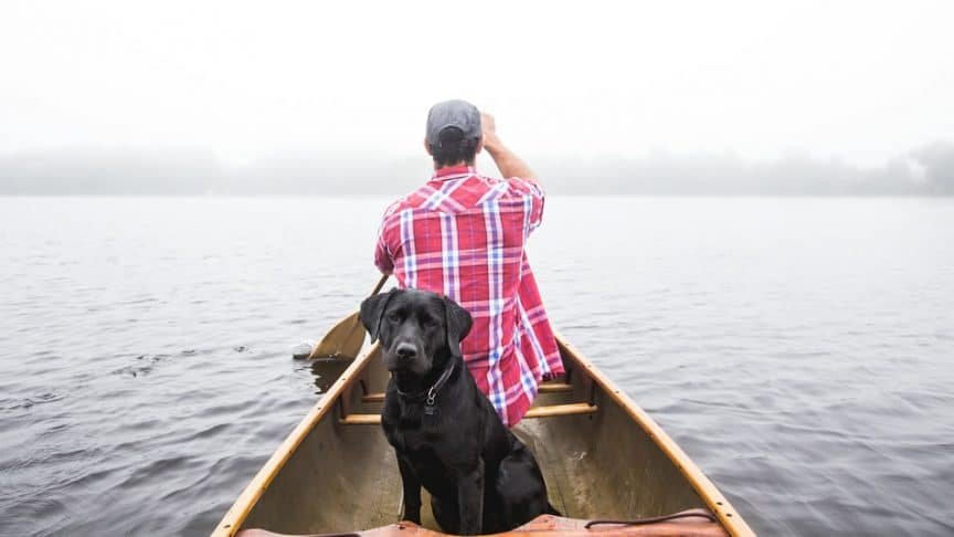 Everything you should know about boating with a dog